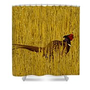 A Pheasant Looking For A Mate Shower Curtain