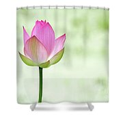 A Pink Lotus Shower Curtain