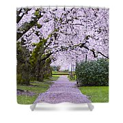 A Pink Pathway Shower Curtain