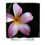 A Pink Plumeria Shower Curtain