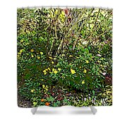 A Place Along The Way To Stop And Rest Shower Curtain by Eikoni Images