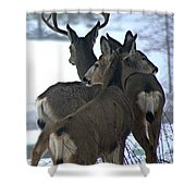 A Place To Rest Your Head Shower Curtain