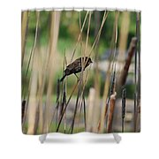 A Plumage Sparrow Shower Curtain