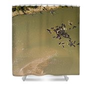 A Pod Of Hippos In The Luangwa River Shower Curtain