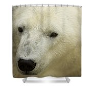 A Polar Bear At The Henry Doorly Zoo Shower Curtain