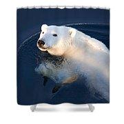 A Polar Bear Glance Shower Curtain