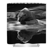 A Polar Bear Reflects Shower Curtain