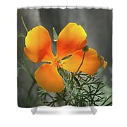 A Poppy Unfurled  Shower Curtain