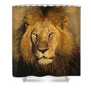 A Portrait Of A Male Shower Curtain