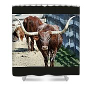 A Portrait Of A Texas Longhorn Steer Shower Curtain