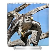 A Prairie Falcon Against A Blue Sky Shower Curtain