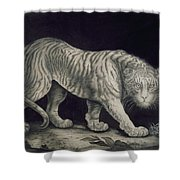 A Prowling Tiger Shower Curtain