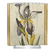 A Purple Iris Shower Curtain