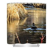 A Quiet Morning Swim Shower Curtain