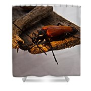 A Red Glowing Beetle Shower Curtain