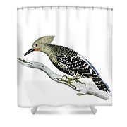 A Red Headed Woodpecker 2 Shower Curtain