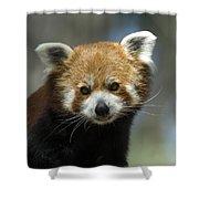A Red Panda Ailurus Fulgens At Zoo Shower Curtain