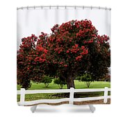A Red Pin Under A Red Tree At Morro Bay Golf Course Shower Curtain