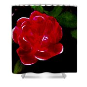 A Red Rose  Shower Curtain