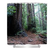A Redwood Trail Shower Curtain