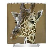 A Reticulated Giraffe Makes A Slanted Shower Curtain