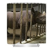 A Rhino At The Sedgwick County Zoo Shower Curtain
