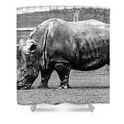 A Rhinoceros Shower Curtain