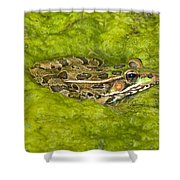 A Rio Grande Leopard Frog Sitting On A Shower Curtain