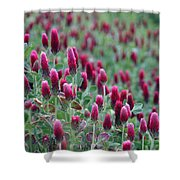 A Riot Of Red Clover Shower Curtain