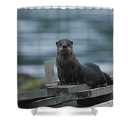 A River Otter Perched On Planks Of Wood Shower Curtain