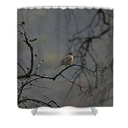 A Robin In Spring Snowfall  Shower Curtain