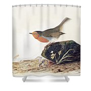 A Robin Perched On A Mossy Stone Shower Curtain