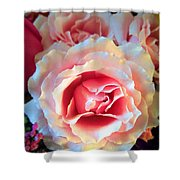 A Romantic Pink Rose Shower Curtain