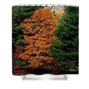 A Rose Between Two Thorns Shower Curtain by DigiArt Diaries by Vicky B Fuller