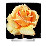A Rose By Any Other Name Would Smell As Sweet Shower Curtain