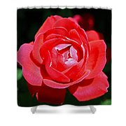 A Rose Shower Curtain
