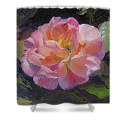A Rose For Aunt Rosie Shower Curtain