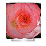 A Rose For Mary Shower Curtain