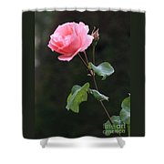 A Rose For Rodin Shower Curtain