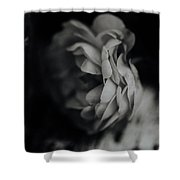A Rose In Black And White Shower Curtain