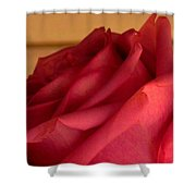 A Rose In Horizonal Shower Curtain