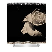 A Rose Is But A Rose  Shower Curtain