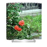 A Rose Is Down Shower Curtain