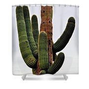 A Saguaro Afternoon Shower Curtain