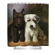 A Scottish And A Sealyham Terrier Shower Curtain