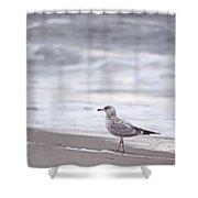 A Seagull At The Beach Shower Curtain