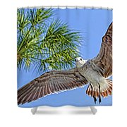 A Seagull Flyby Shower Curtain
