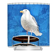 A Seagull Pauses Shower Curtain