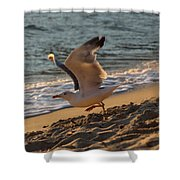 A Seagull Starts His Flight Shower Curtain