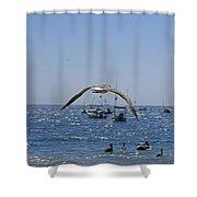 A Seagulll In-flight At Playa Manzanillo Shower Curtain